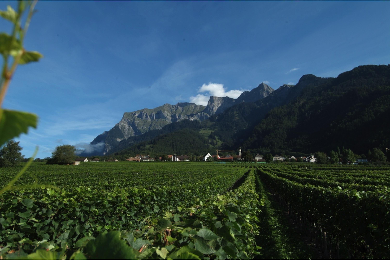 Deutschschweiz Graubunden Weinberg Swisswine Jenins