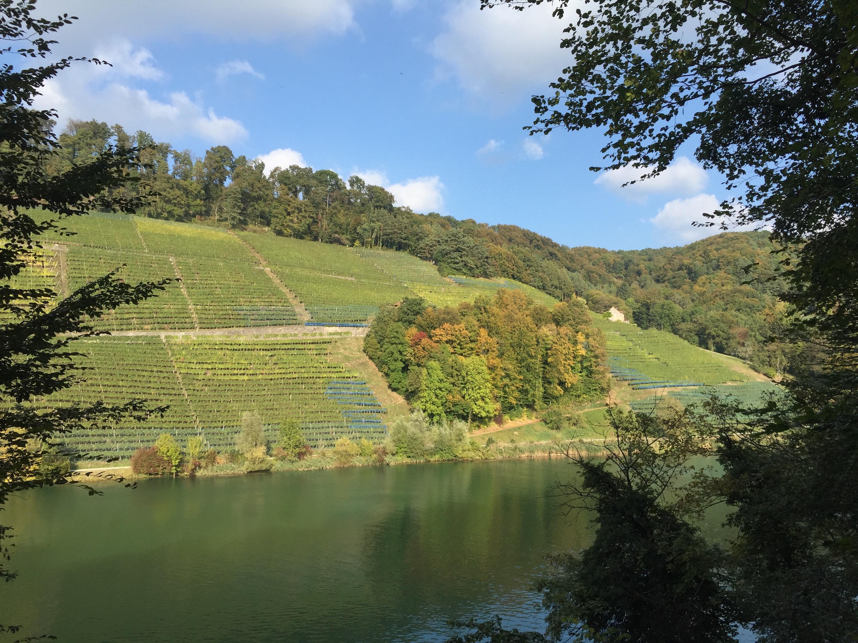 Swisswine Deutschschweiz Zurich Eglisau Weinberg
