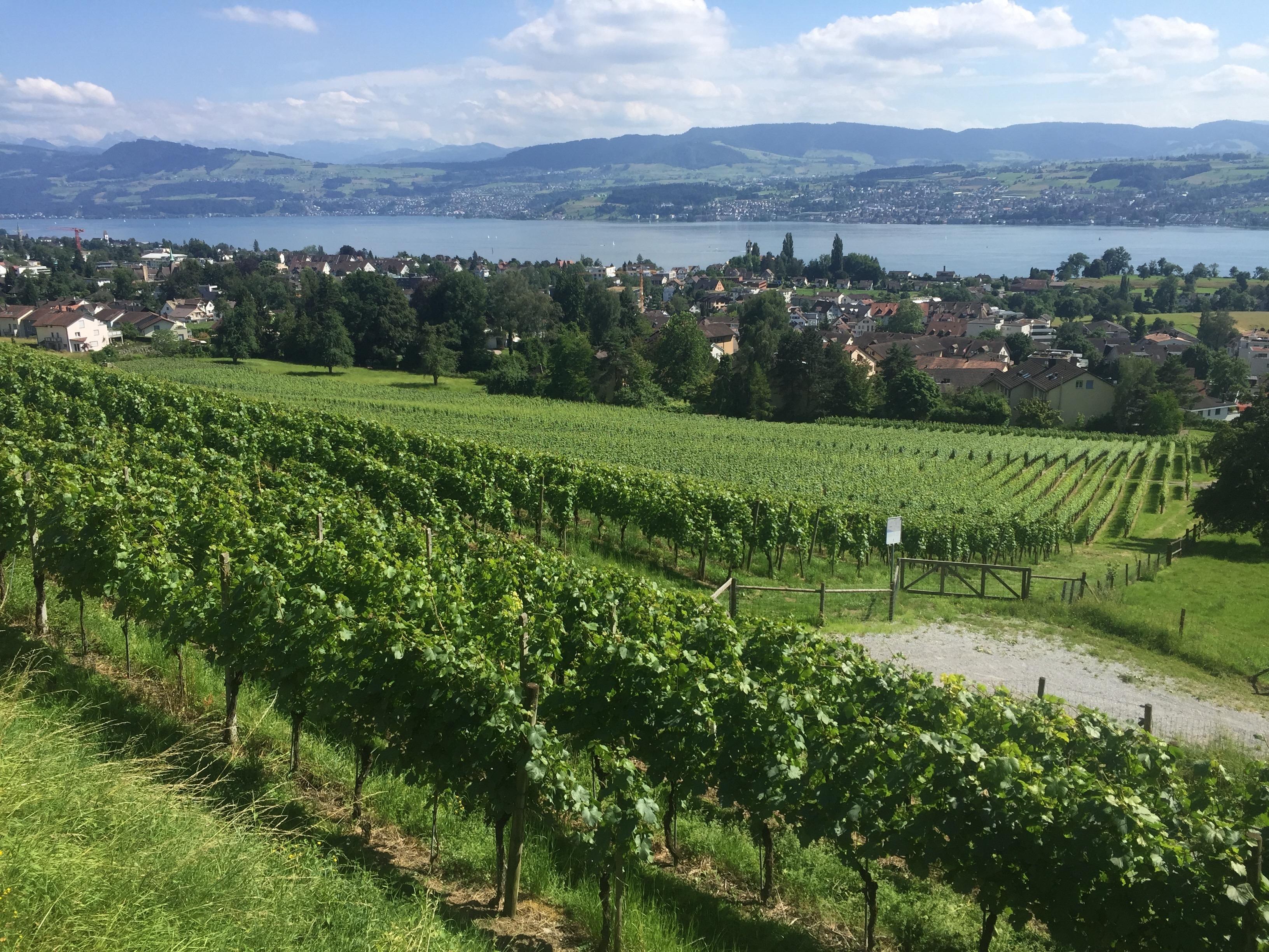 Swisswine Schweizer Weine Deutschschweiz Zürichsee