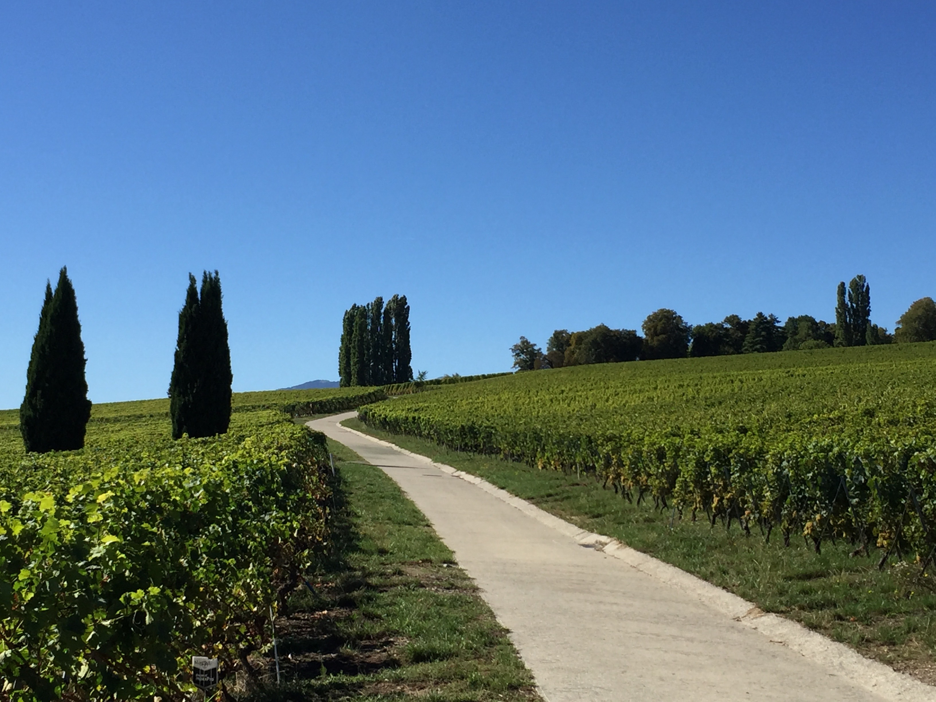 Geneve Mandement Automne Choully