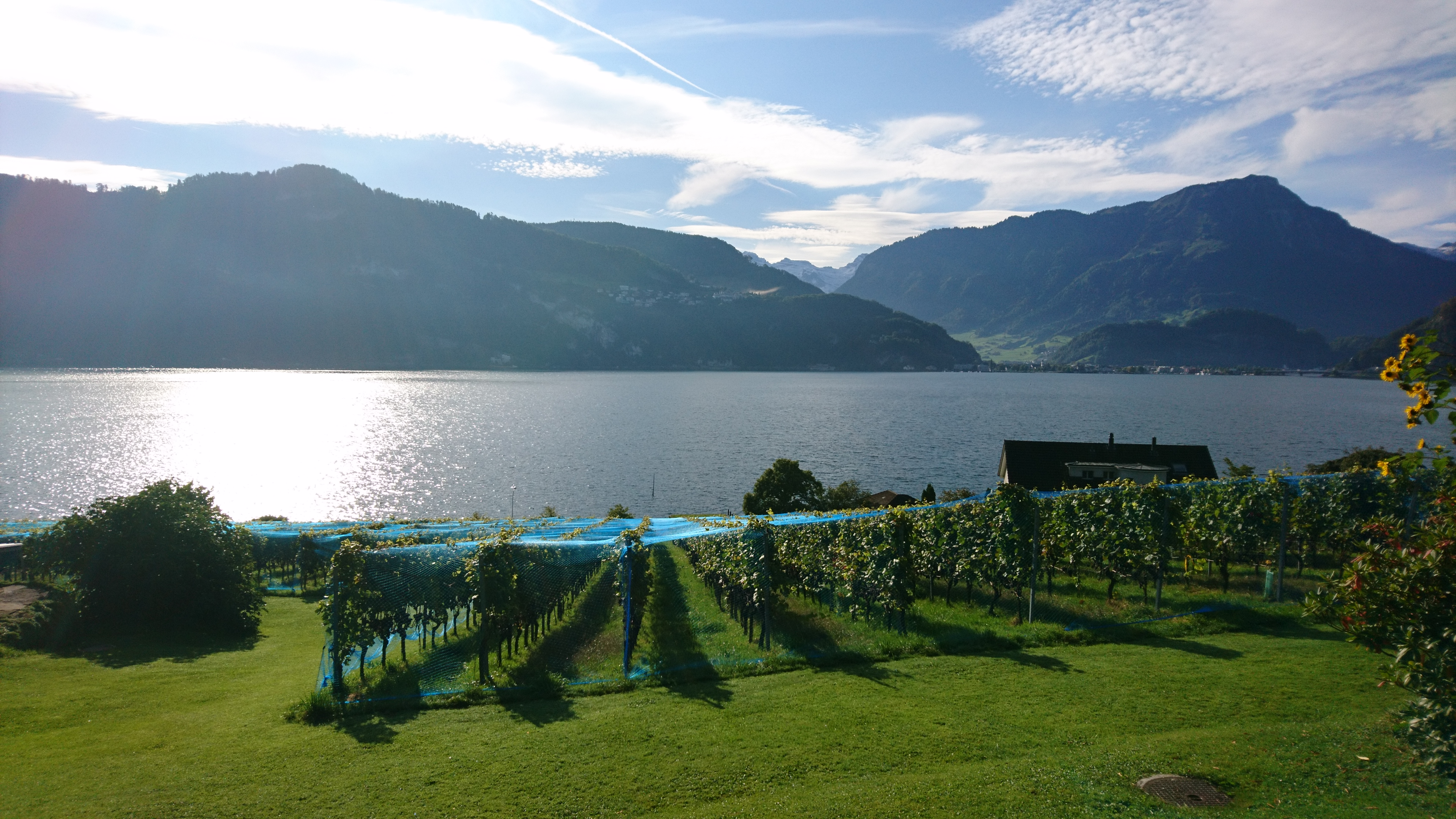 Swisswine Schweizer Weine Deutschschweiz Luzern (weinbauottiger.ch)