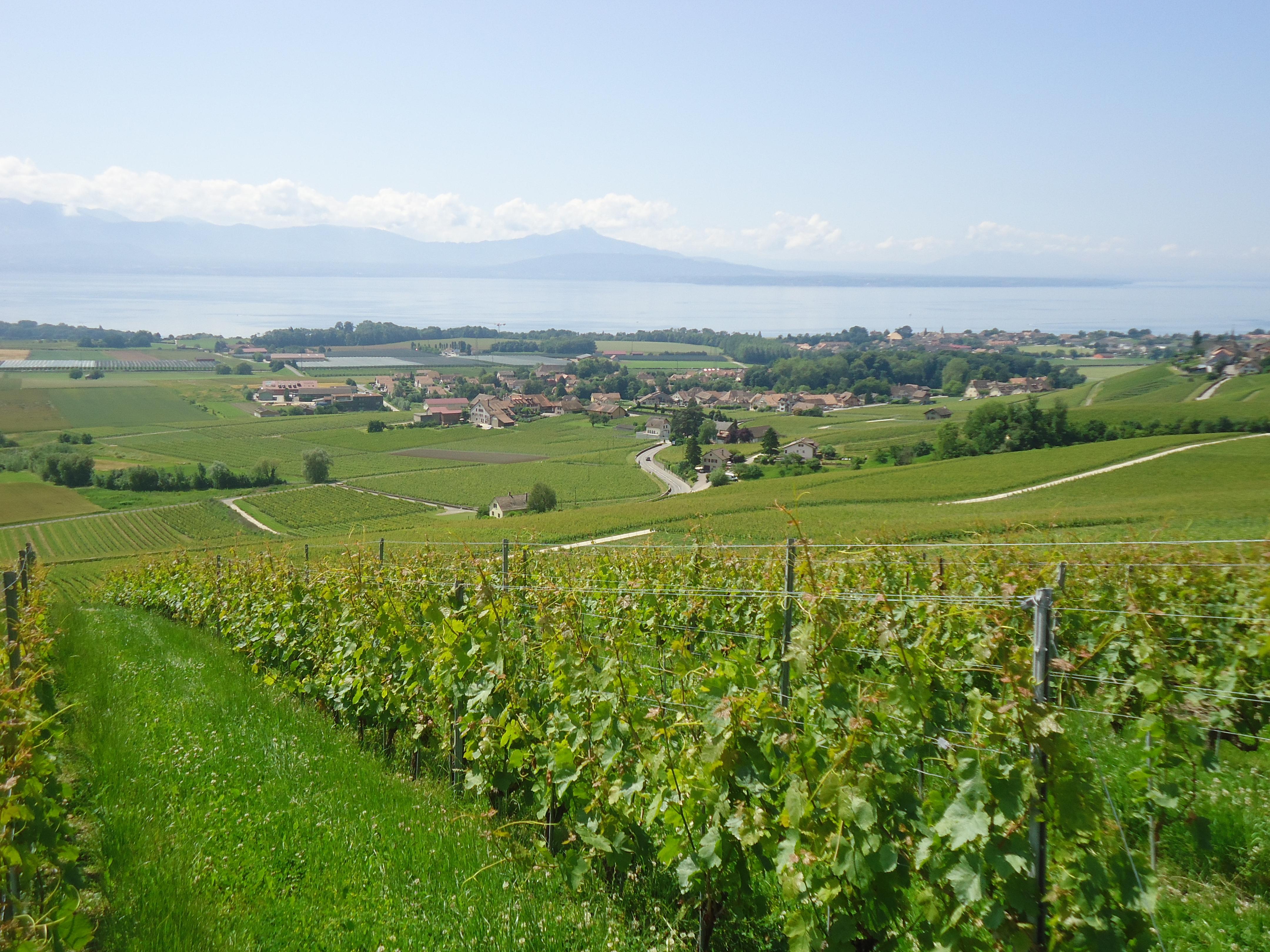 Www Lacentrale Fr Cote : vd printemps vaud la cote fechy lac swiss wine ~ Gottalentnigeria.com Avis de Voitures