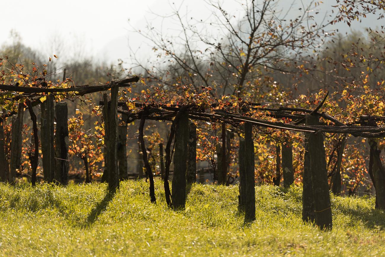Ticino autunno