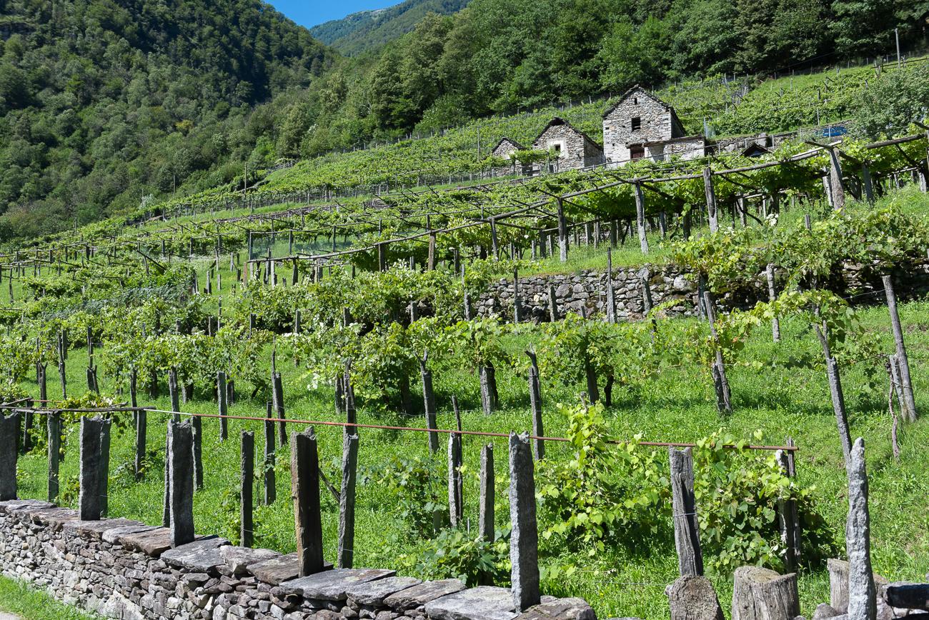 Ticino Estate