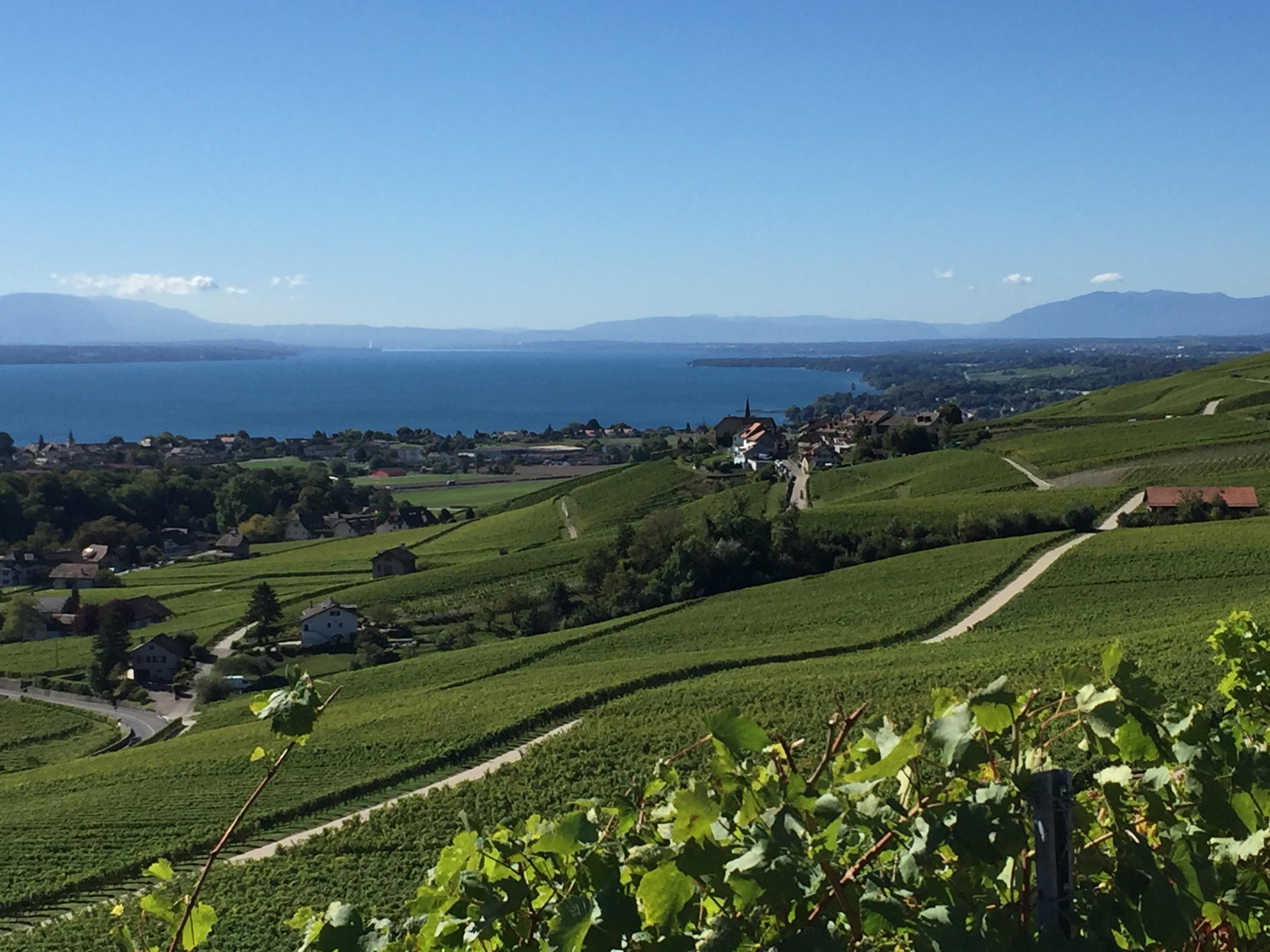 Vaud La Cote Fechy automne