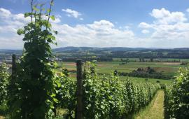 Swisswine Schweizer Weine Deutschschweiz Thurgau Otteberg Sommer