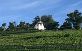 Deutschschweiz Weinberge Sankt Gallen Sommer
