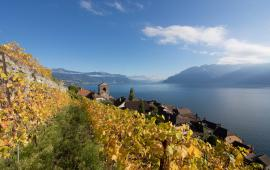 Swisswine Vin Suisse Vaud Lavaux Saint Saphorin
