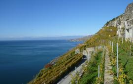 Swisswine Vin Suisse Vaud Lavaux Dezaley