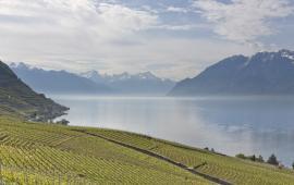 Lausanne Great Wine Capitals, credit: OVV