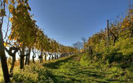 Swisswine Vini Svizzeri Ticino Autunno