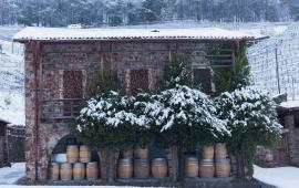 Swisswine Vini Svizzeri Ticino Inverno