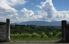 Schweizer Weine Genf