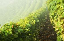 Vin Suisse Bio