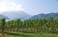 Die Deutschweizer Weinberge