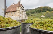 Swissiwne Trois Lacs Neuchâtel