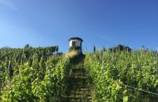 Schweizer Weine Zurich Staffa capite