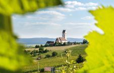 Schaffhausen; Blauburgunder Land, Hallau