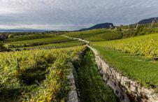 Swiss Wine Neuchatel Bio