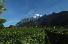 Swiss Wine Schweizer Weine Graubuenden