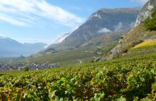 Schweizer Weine Wallis