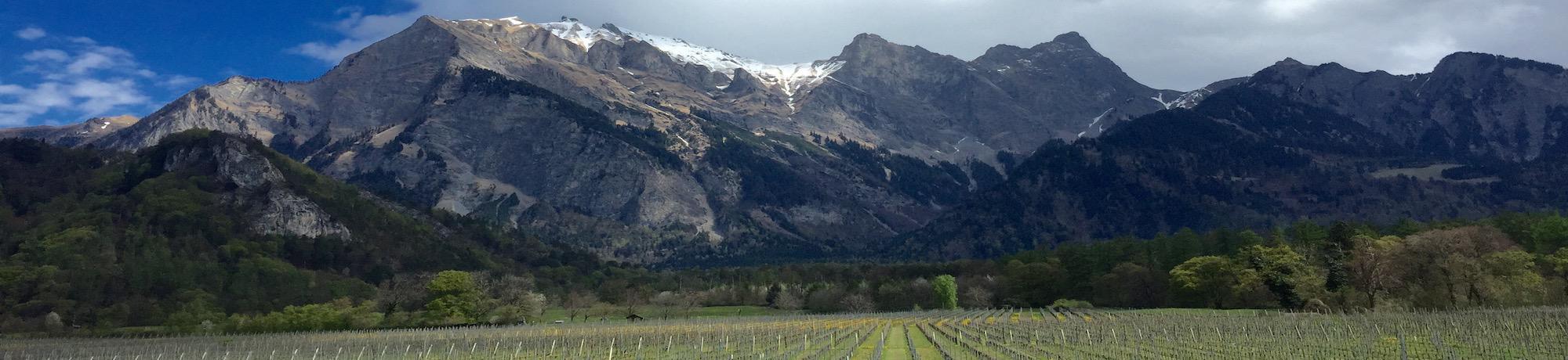 swiss wine_spring_graubünden