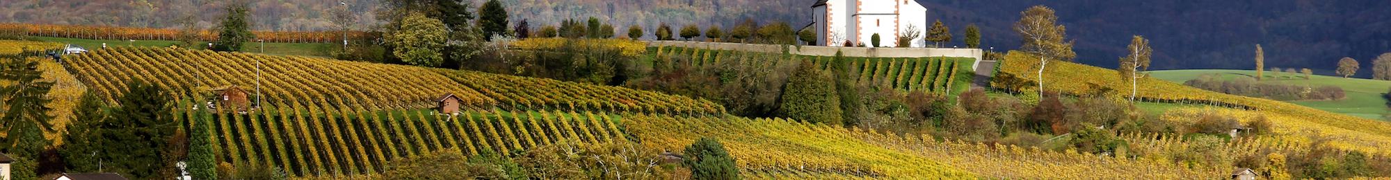 Swiss Wine Schaffhausen