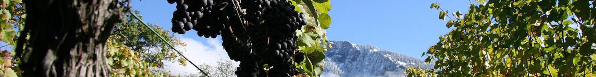 Swiss Wine Graubunden