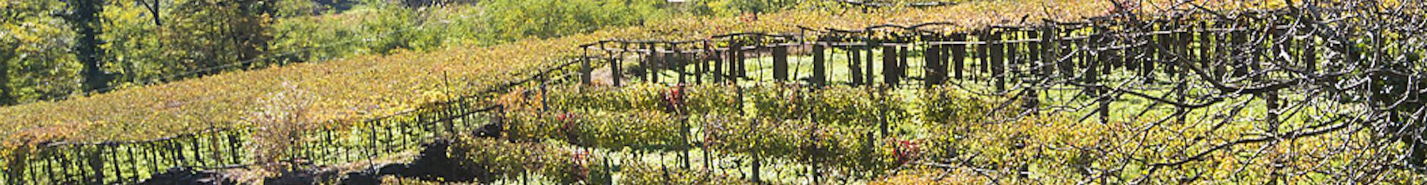 Swiss Wine Ticino
