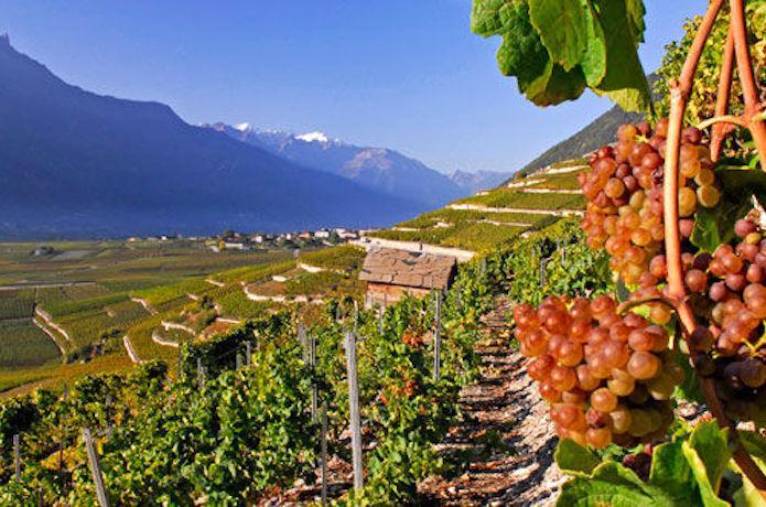 Vin Suisse, Valais, Chamoson