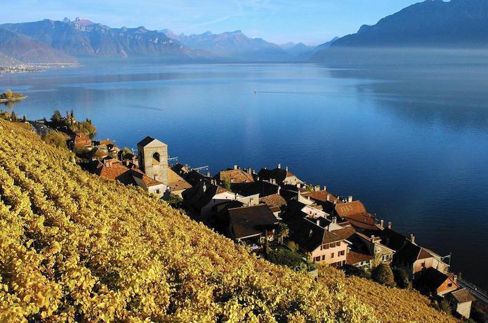 Swiss Wine Lavaux