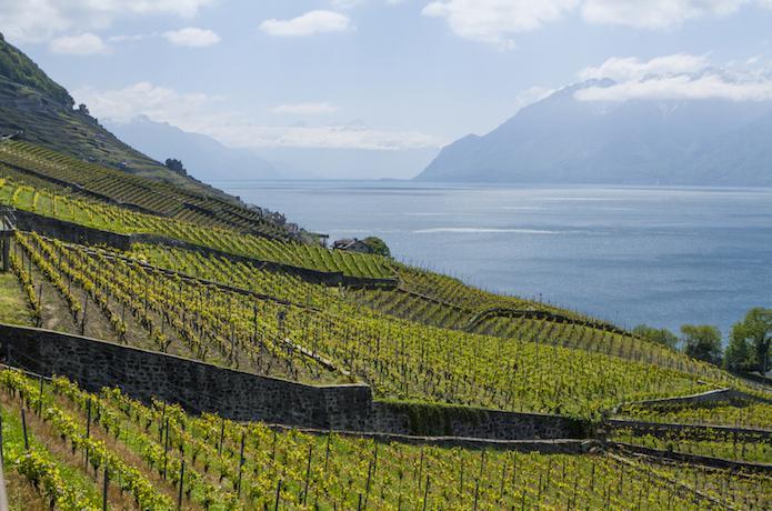Swiss Wine Vaud Lavaux