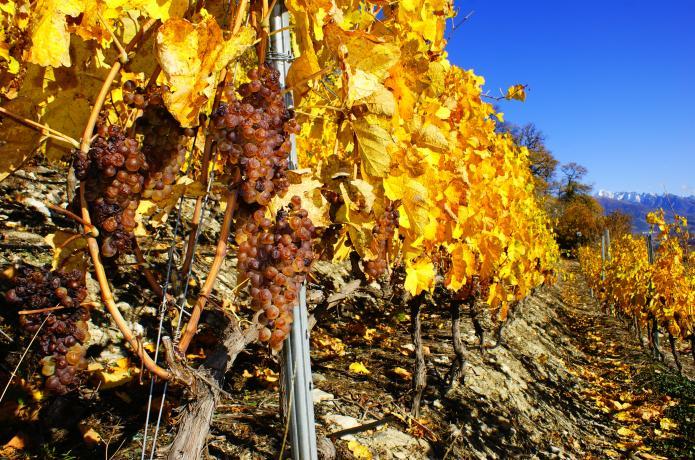 vin liquoreux suisse